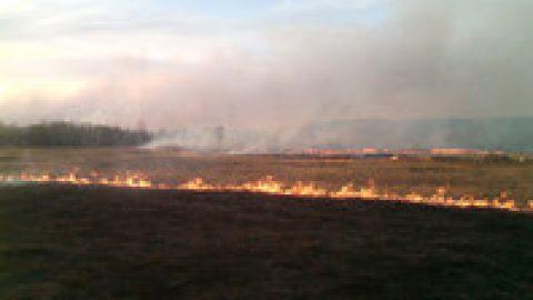 На территории Сибирского федерального округа из-за пожаров введен режим ЧС