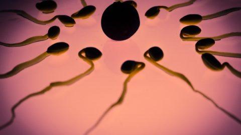 Ученые рассказали, как легко зачать ребенка от трех родителей