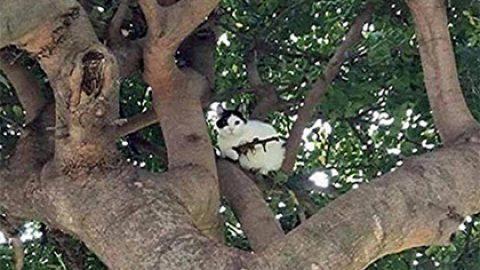 Полиция в Орегоне отреагировала на сообщение о вооруженном винтовкой коте