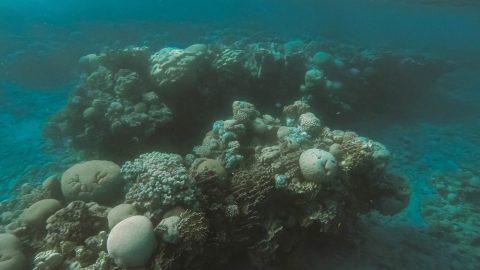 Выставка, посвященная подводному миру, откроется в Северной столице